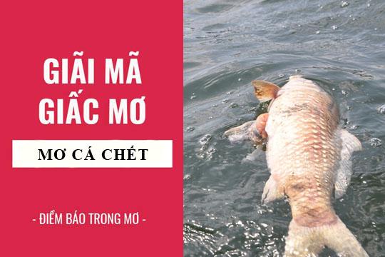 Nằm mơ thấy cá chết
