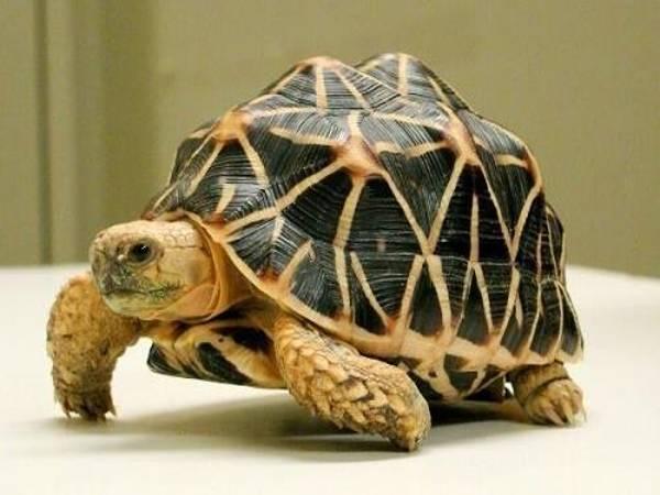 Mơ thấy con Rùa