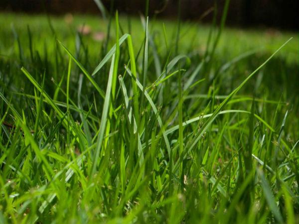 """Nằm mơ thấy cỏ con gì ăn chắc nhất - Nằm mơ thấy đàn gà là điềm báo gì hung hay cát? Giải mã ý nghĩa giấc mộng thấy cỏ, chiêm bao thấy cỏ xanh,,, cùng bộ số lô đề trúng lớn với chuyên gia? Giải Mã Giấc Mơ Thấy Cỏ Là Điềm Gì? Nằm Mơ Thấy Cây Cỏ Xanh Tươi Nếu trong giấc mơ bạn nằm mơ thấy cây cỏ xanh tươi thì đây là điềm báo may mắn nói đến bạn đang hạnh phúc, vui vẻ, sự hy vọng cũng như sức khoẻ luôn tốt. Có thể giấc mơ nói đến mọi việc đang trên đà phát triển thuận lợi đấy. Nằm Mơ Thấy Cỏ 4 Lá Giấc mơ mang ý nghĩa là bạn sẽ sớm được công thành danh toại và tiền bạc đầy nhà. Bên cạnh đó giấc mơ còn cho thấy bạn không chỉ có được cuộc sống viên mãn trong sự nghiệp mà bạn còn hạnh phúc cả trong tình yêu. May mắn cứ liên tục tấn tới đến với bạn. Nằm Mơ Thấy Cỏ Ba Lá Chiêm bao cho thấy những nỗ lực cố gắng, nỗ lực bấy lâu nay của bạn bỏ ra nay sẽ được đền đáp xứng đáng. Chính vì thế bạn sẽ có được sự nghiệp vững vàng và tiến triển tốt đẹp. Nằm mơ thấy ăn cỏ Nếu nằm mơ thấy chính mình đang ăn những cây cỏ xanh kia. Có thể bạn đang cảm thấy bí bách và thiếu sức sống. Khả năng rất lớn là bạn ở trong hoàn cảnh """"thân bất do kỷ"""". Tuy nhiên hãy bình tĩnh trau dồi bản thân để tóm lấy thời cơ. Thành công sẽ không bỏ qua với người biết cố gắng. Nằm mơ thấy đồng cỏ xanh Một đồng cỏ xanh mướt dưới ánh nắng chan hòa ấm áp luôn đem lại cảm giác yên bình cho bất cứ ai. Có thể hiện giờ trong lòng bạn vô cùng rối bời. Tận sâu trong tim bạn muốn tìm đến cảm giác bình yên vô tận. Nếu mệt mỏi quá hãy dừng lại để lắng nghe chính mình. Mộng mị thấy cắt cỏ khô Nếu thấy ai đó cắt cỏ khô thì bạn hãy bình tĩnh và nhìn nhận lại bản thân để có được cuộc sống hài hòa và cân bằng hơn. Chiêm bao thấy một bãi cỏ vàng úa Thấy một bãi cỏ vàng úa hoặc khô héo trong mơ, nghĩa là có sự không hài lòng về khía cạnh nào đó trong cuộc sống gia đình. Có thể bạn quá lo lắng về những gì người khác nghĩ về bạn. Chiêm Bao Nằm Mơ Thấy Cỏ Đánh Số Mấy? Với những gì chúng tôi đã mang đến phần giải mã giấc mơ thấy cỏ phí"""