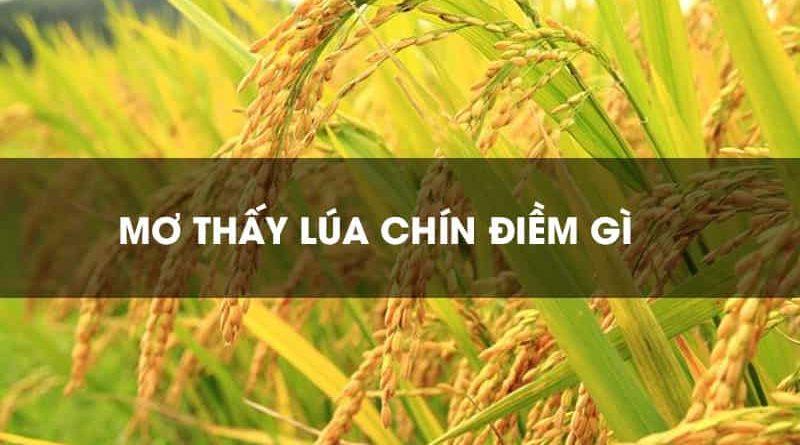 Mơ thấy lúa điềm báo gì đánh số gì