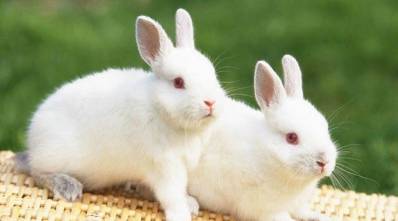 Mơ thấy thỏ thì sao? đánh số gì thì trúng lớn