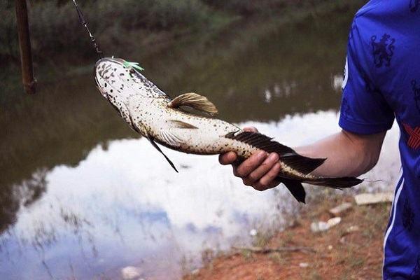 Nằm mơ thấy bắt cá đánh con gì