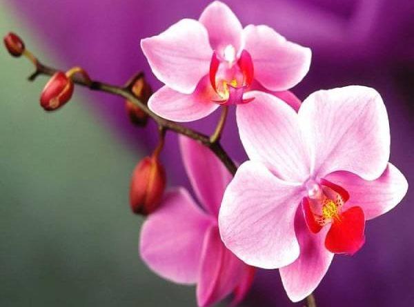 Nằm mơ thấy hoa lan là điềm tốt hay xấu ? Đánh số mấy ?